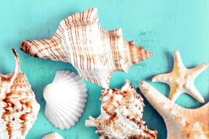 Top view on starfish and seashells on blue wooden background