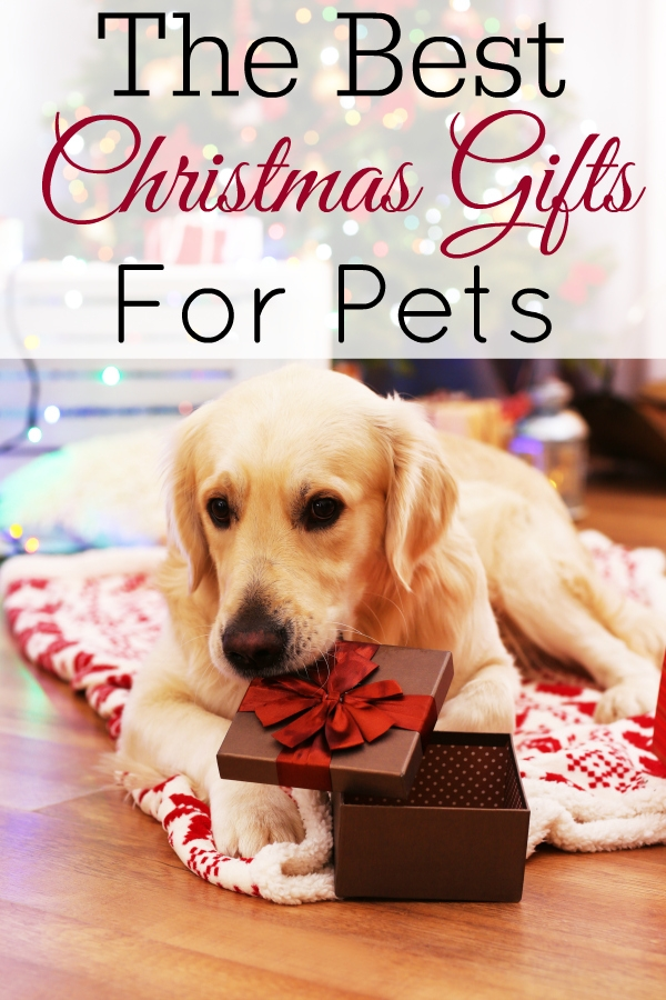 golden retriever on bed with Christmas gift
