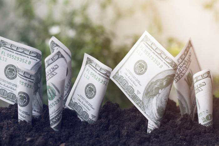 dollar bills growing in soil