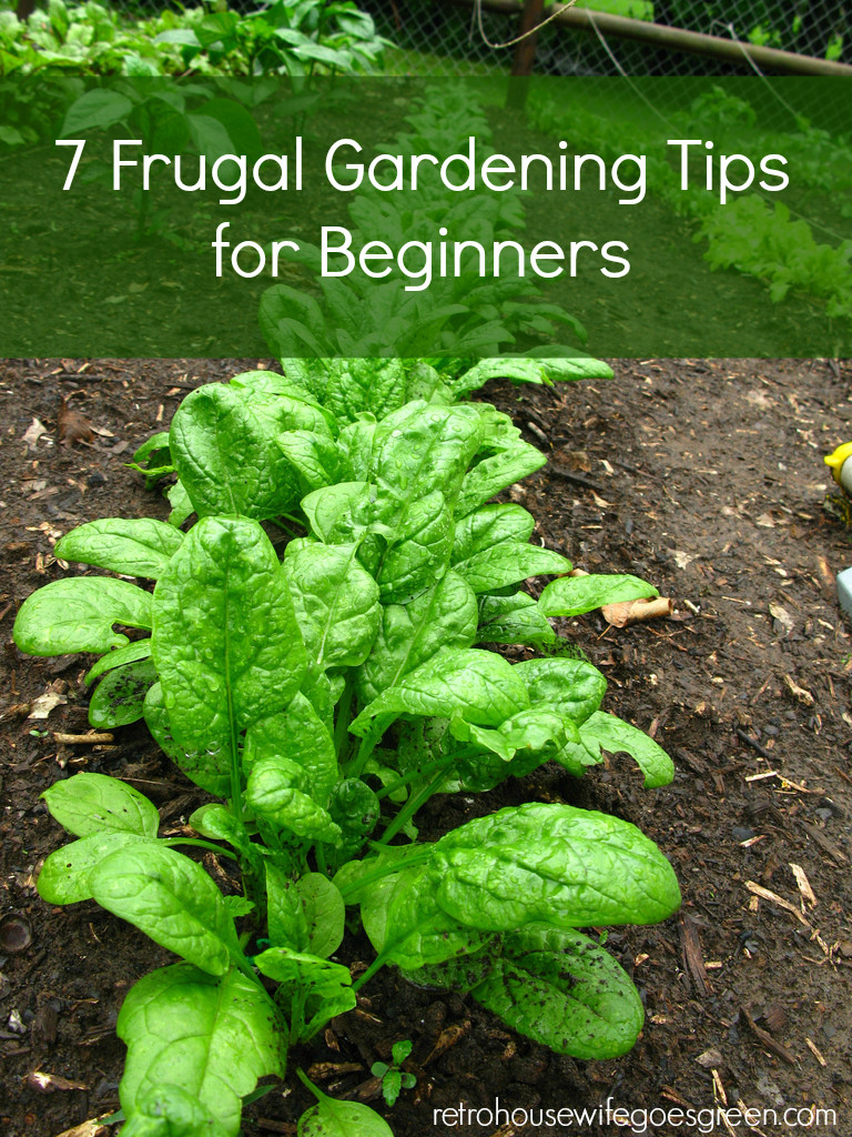 7 Frugal Gardening Tips for Beginners