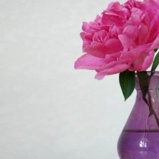 pink flower in purple vase
