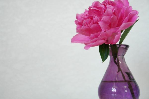 pink flower in purple vase