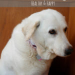 7 Tips for Keeping Your Senior Dog Healthy