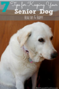 I love these tips for keeping your senior dog healthy!