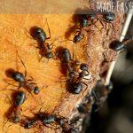 Natural Pest Control Made Easy