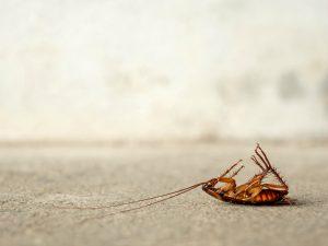 Dead cockroach on floor