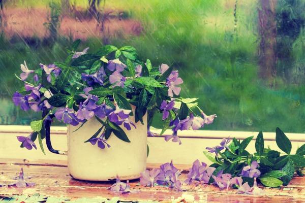 Purple Flowers Near Window in the Rain