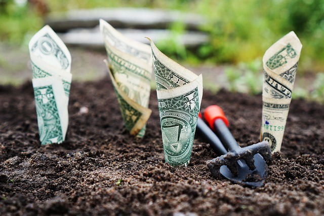 Dollar bills coming out of dirt
