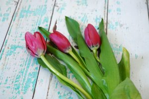 Pink tulips on aqua and white wooden background