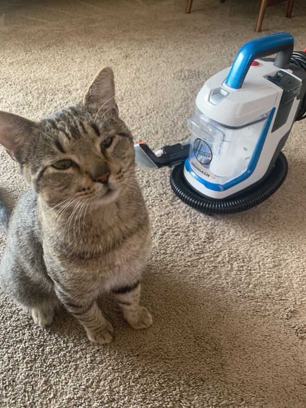 cat sitting next to Hoover spot cleaner